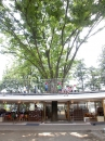 Tezuka Architects-Fuji Kindergarten -2