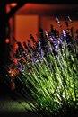 DALD - David Atkinson Lighting Design-Private Garden, Essex -5