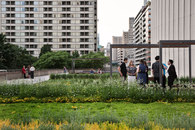Hoerr Schaudt Landscape Architects-Nathan Phillips Square -4