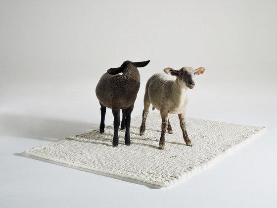 Pudelskern-Fat Sheep