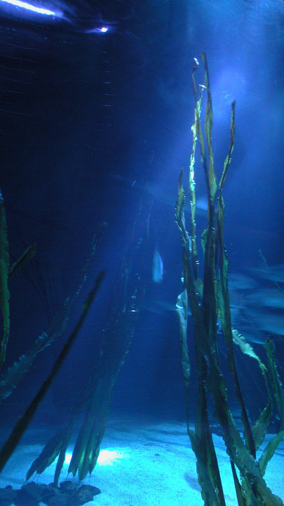 Archiluce Lighting Design-Genoa Aquarium