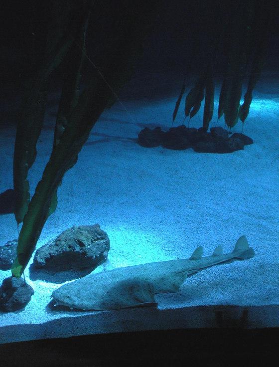 Acquario di Genova di ARCHiLUCE LiGHTiNG DESiGN | Musei
