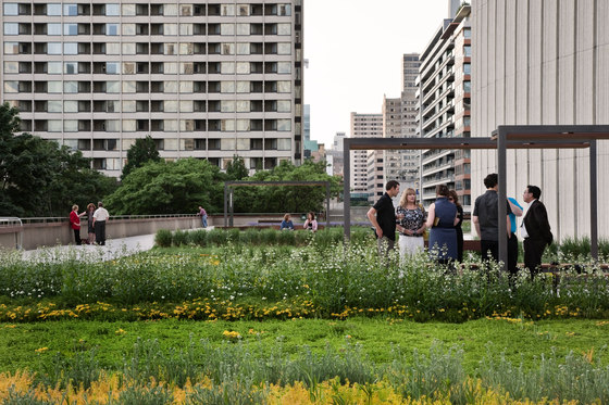 Nathan Phillips Square by Hoerr Schaudt Landscape Architects | Gardens