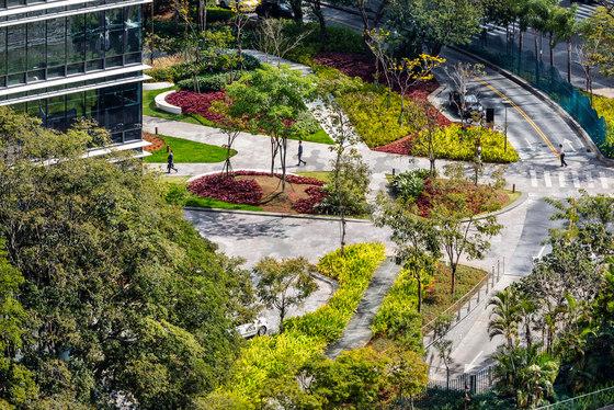 A Mata Atlântica Forest in São Paulo by Balmori Associates | Parks
