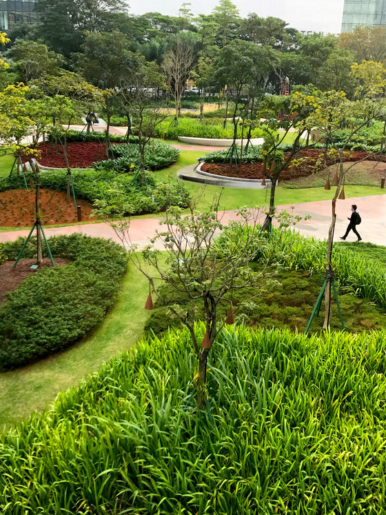 A Mata Atlântica Forest in São Paulo by Balmori Associates   Parks