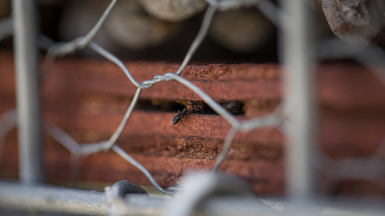Vallmora Park + Insect Hotel by Batlle I Roig Arquitectura | Parks