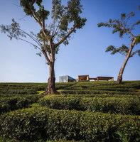 Choui Fong Tea Cafe | Restaurants | IDIN ARCHITECTS