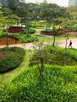 A Mata Atlântica Forest in São Paulo   Parks   Balmori Associates