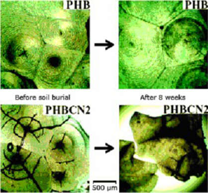 polyhydroxybutyrate phb 2 manufacturing and properties of phb (1) in pharmacology, phb can be used as microcapsules in therapy or as materials for cell and tablet packaging.