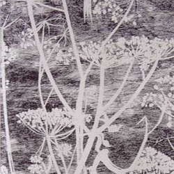 Cow Parsley [New Contemporary]