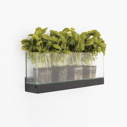 Front Plant