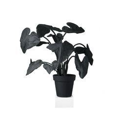 Feltplants