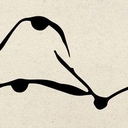 Aquatic Duck