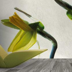 petals   narciso