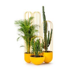 Cacti planter