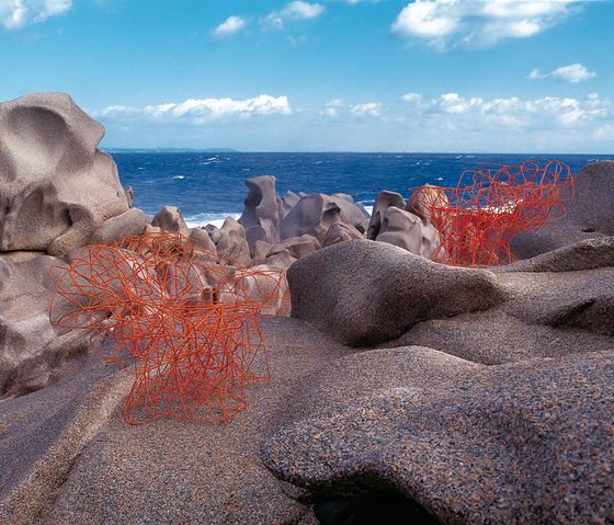 Corallo di edra