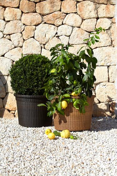 Botanic Pot Naturalfrit di Cane-line
