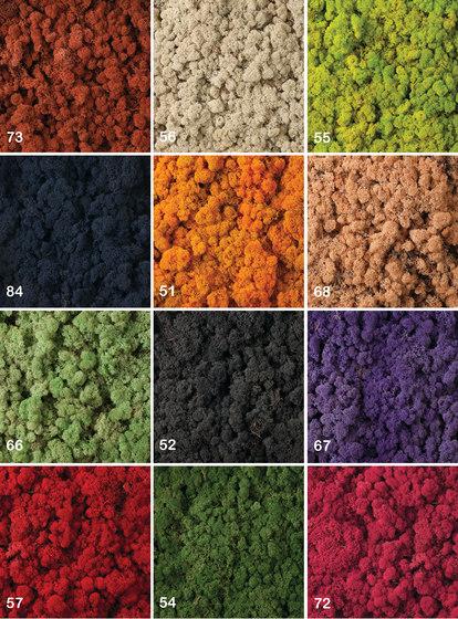 Moss Parete di Verde Profilo  Moss Wall  Prodotto
