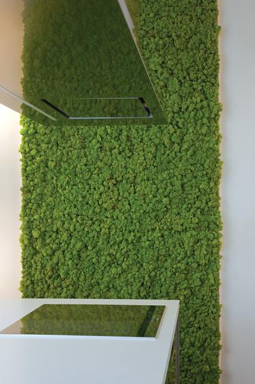 Moss Wall by Verde Profilo