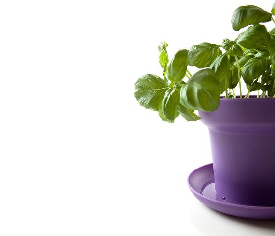 GREEN Plant Pot by Authentics
