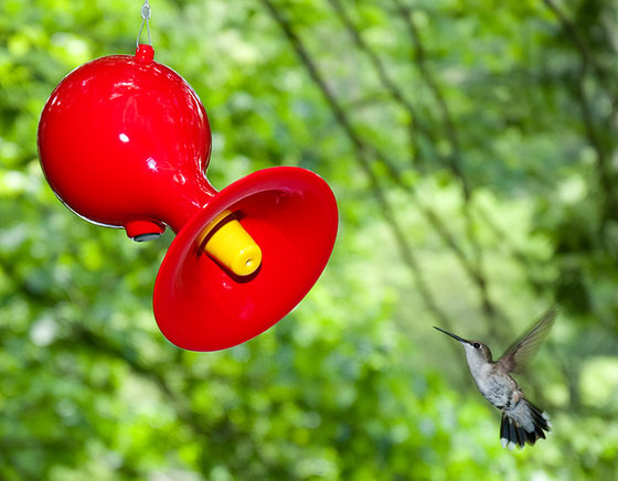Hummingbird Feeder by J Schatz