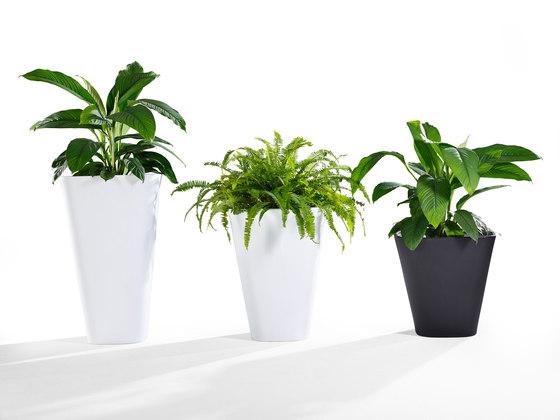 Kono, Planter di Derlot Editions