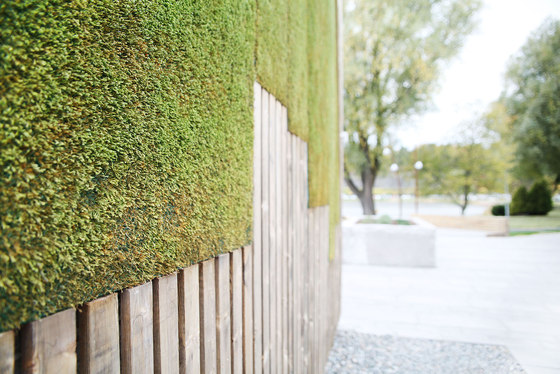 Outdoor Moss Wall by Greenworks
