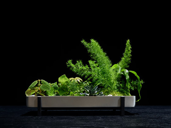 Greenery Flower Tray by Design House Stockholm