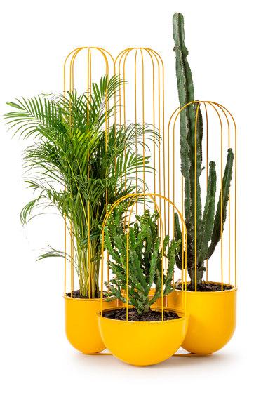 Cacti planter di nola