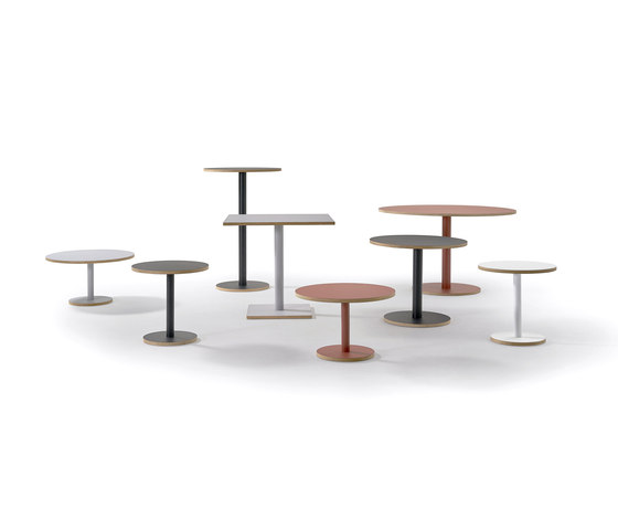 Dumbbell by Sancal