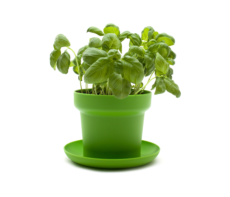 GREEN Plant Pot ... Sc 1 St Architonic  sc 1 st  startupinsights.org & Green Flower Pot \u0026 Set Of 3 Olive Tree Keramo Flower Pot Sc 1 Th 225