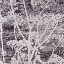 Cow Parsley 66-7046 wallpaper | Papeles pintados | Cole and Son