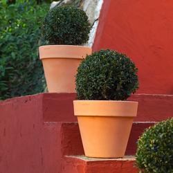Fang maceta | Flowerpots / Planters | Vondom