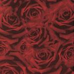 Rose rosse 75x25 | Wall tiles | Iris Ceramica