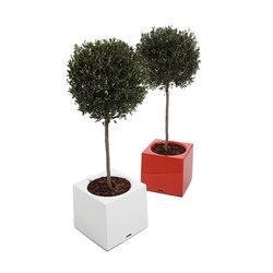 Alea | Flowerpots / Planters | extremis