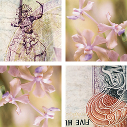 Orchid Dancer | Synthetic films | tela-design