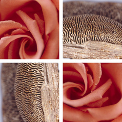 Rosy Mushroom | Synthetic films | tela-design