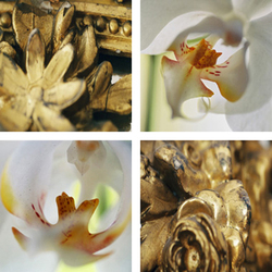 Gold Framing Orchids | Fogli di plastica | tela-design