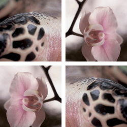 Orchid Meets Reptile | Synthetic films | tela-design