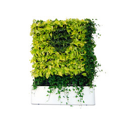 Moving Hedge | Privacy screen | Greenworks