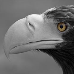 No. 5413 | Sea eagle | Wall coverings | Berlintapete