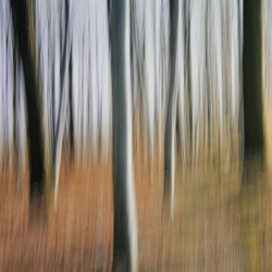 No. 6582 | Abstract forest | Wall coverings / wallpapers | Berlintapete