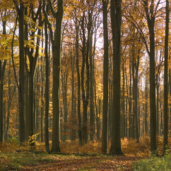 No. 5151 | Autumn Forest | Wall coverings / wallpapers | Berlintapete