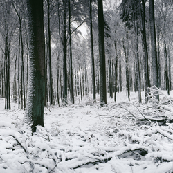 No. 3711 | Snow Forest | Papiers peint | Berlintapete