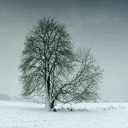 No. 6384 | Tree in landscape | Wall coverings / wallpapers | Berlintapete