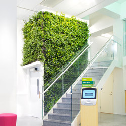 Indoor Plant Walls | Plant pots | Greenworks