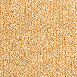 Odina 2B66 | Carpet rolls / Wall-to-wall carpets | Vorwerk