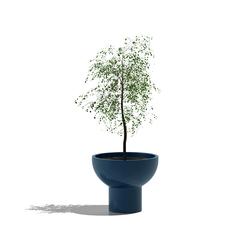 Primavera | Macetas plantas / Jardineras | Serralunga