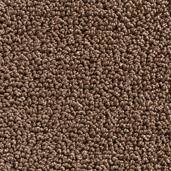Concept 502 - 147 | Carpet rolls / Wall-to-wall carpets | Carpet Concept