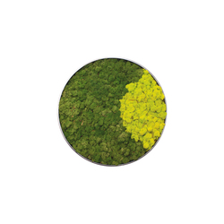 Moss painting C Quadro | Wall decoration | Verde Profilo